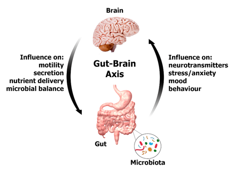 Gut Brain Connection >> The Gut The Brain And Addiction Beyond Addiction